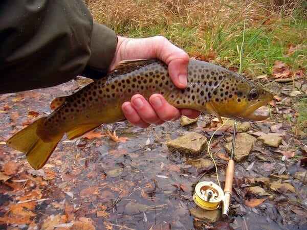 fishing_browntrout