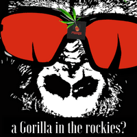 gorillas in the rockies