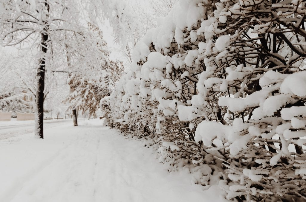 (photography of plants and trees coated with snow)