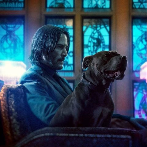 John wick and daisy