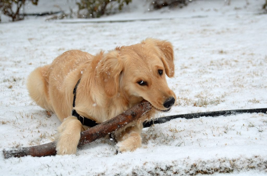Addison stick MLK 15Jan