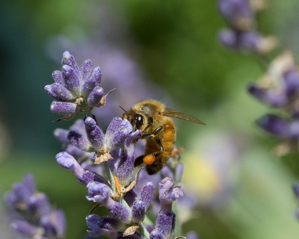 Pic of the Day - Bees in Boulder!